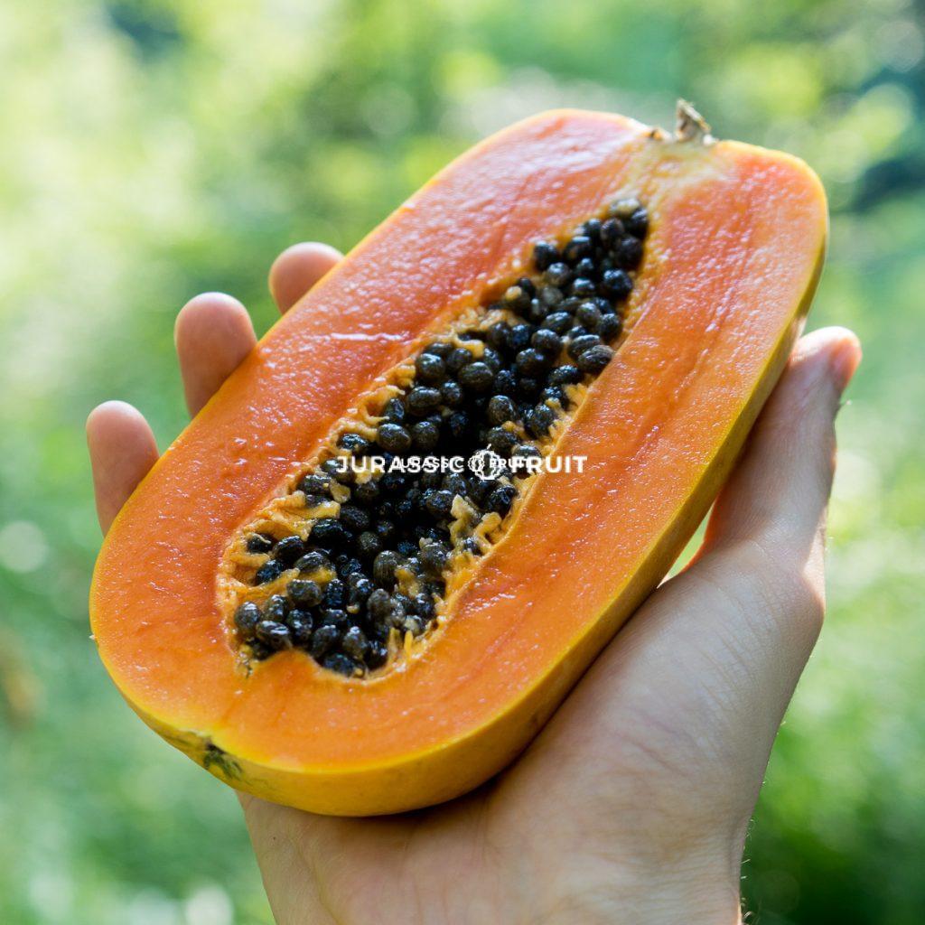 Papaya Nila von Jurassic Fruit