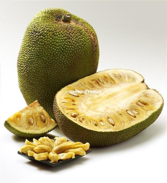 Jackfrucht ganze frucht