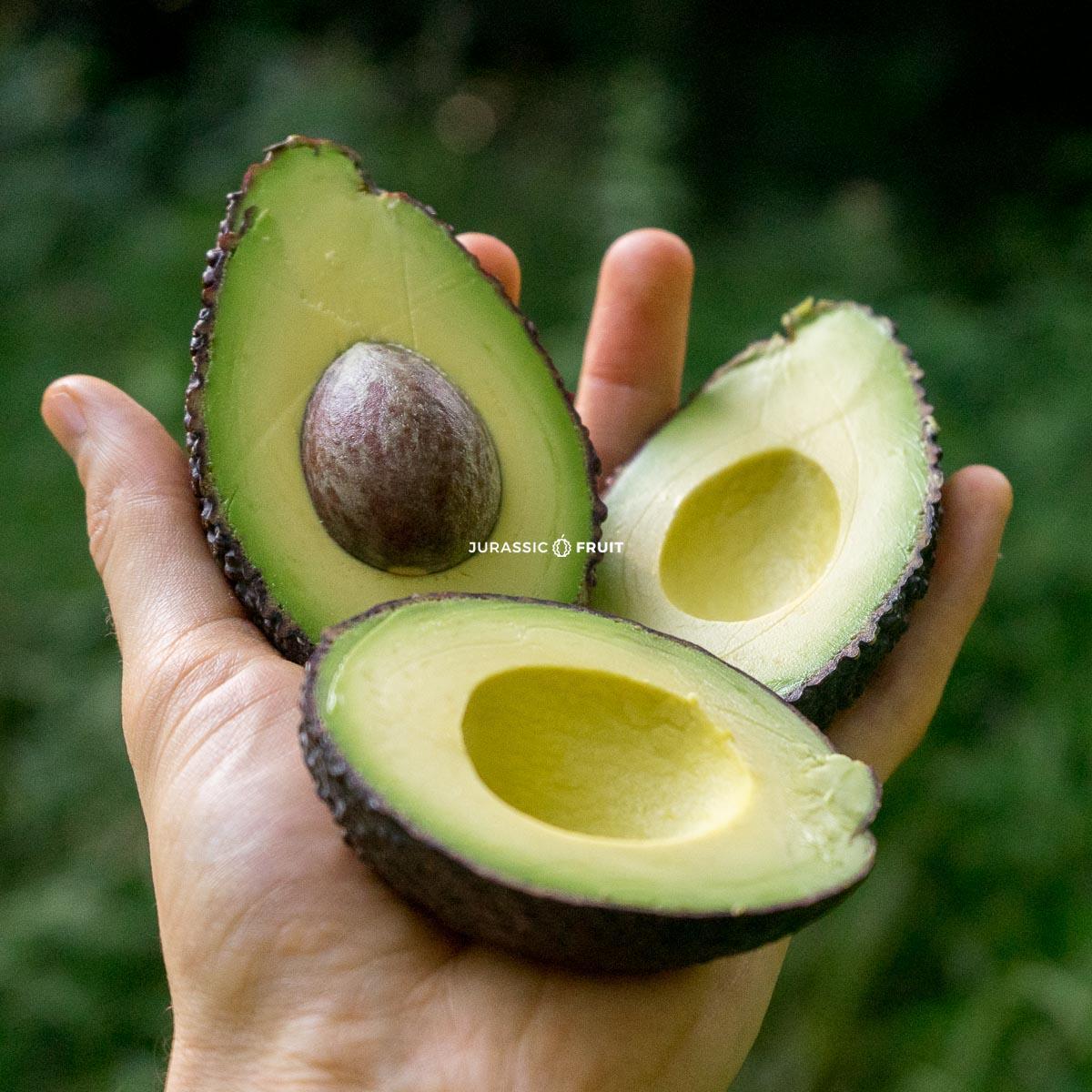 Avocado Hass aus Spanien von Jurassic Fruit