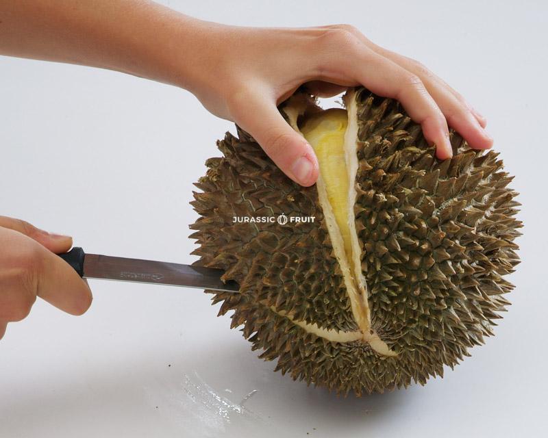 Ouvrir Durian