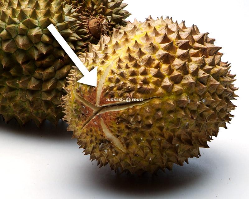 Durian mûr, qui s'ouvre